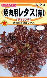 【種子】焼肉用レタス(赤)チマサンチトーホクのタネ