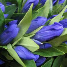 リンドウはこんなお花