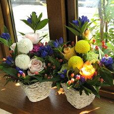 ピンポンマムとリンドウのアレンジメント(花かご)