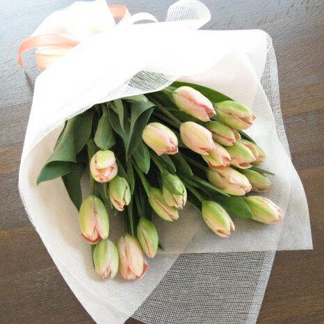 チューリップのシンプル花束(20本タイプ)