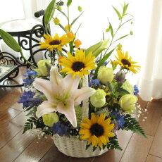 ひまわり誕生日フラワーギフト花誕生祝いフラワーアンセリウムギフトお中元≪送料無料!≫ヒマワリとユリの華やかバスケット・アレンジメント(花かご)