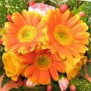 ≪送料無料!≫アイビーベリーのお試しアレンジ♪フラワー ギフト 誕生日 お祝い バラ カーネーション ガーベラ 花束 花 かご お誕生日…