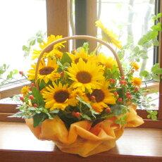 ひまわり誕生日フラワーギフト花誕生祝いフラワーアンセリウムギフトお中元≪送料無料!≫旬のお花をたっぷりと☆ヒマワリの元気花かご