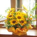 ≪送料&クール便代金込み≫夏の贈りものにピッタリ♪旬のお花をたっぷりと☆ヒマワリの元気花かご★お届けは9月10日まで★ひまわり 誕…