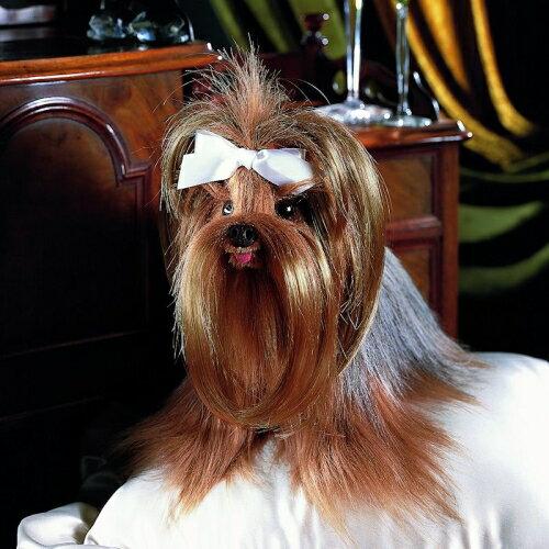 ヨークシャーテリア KOSEN(ケーセン社) 31cm Yorkshire Terrier Yorkie//ぬいぐるみ 犬  いぬ プレゼント/リアル/動物/ギフト/子供/女の子/男の子/大人/クリスマス