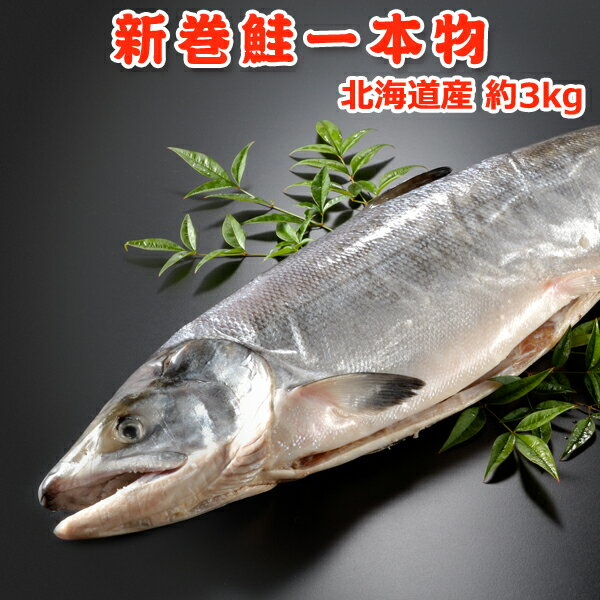北海道産 新巻鮭(秋鮭)一本物【約3キロ】 送料無料・化粧箱入