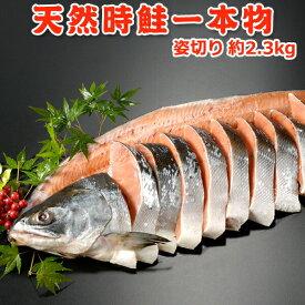 今だけ5,999円!クーポン利用で3,000円OFF!天然時鮭一本物 姿切り 約2.3kg 送料無料 化粧箱入 お取り寄せグルメ
