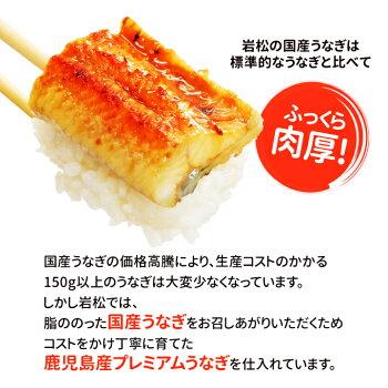 ギフトボックス付国産うなぎ蒲焼【約170g×2尾】【送料無料】ふっくら焼き