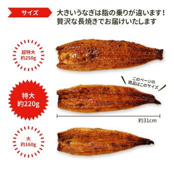 ギフトうなぎ蒲焼国産送料無料特大約220g2尾特別ラッピングプレゼント