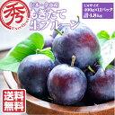 プルーン 生 4.8kg 400g×12パック 送料無料 ぷるーん 訳あり じゃない! 北海道 北海道産 余市 仁木 果物 フルーツ …