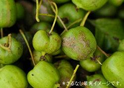 岩手県軽米町産サルナシ使用豊富なビタミン