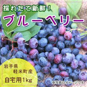 【発送予定 7月中旬〜】岩手県軽米町産 ブルーベリー1kg(自宅用)国産,天然,生果実