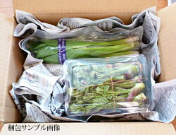 岩手県より産地直送とれたて山菜発送サンプル