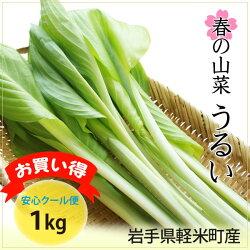 岩手県軽米町産山菜うるい1kg