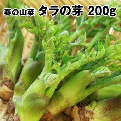 岩手県軽米町産山菜たらの芽200g