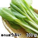 岩手県軽米町産山菜・うるい(ウルイ)300g