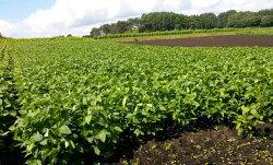 岩手県軽米町産のエゴマ100%使用