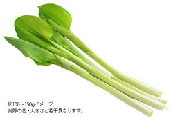 簡単・手軽で美味しい山菜・苦味のない山菜ウルイ