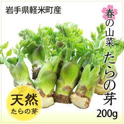 人気!山菜の王様たらのめ(タランボ・たらぼ)