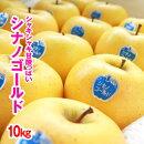 訳ありリンゴシナノゴールド10kg(自宅用)