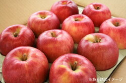お試し価格のおいしいリンゴ3kgを産地直送