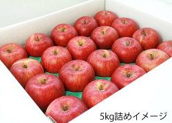 秋の旬!フルーツ・リンゴ、お得な家庭用