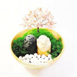 苔テラリウム キット 【開運 花見地蔵】苔 苔盆栽 癒し インテリア 和風 玄関飾り プレゼント お祝い 開店祝い 開業祝い 縁起物 長寿祝い