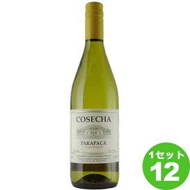 超コスパ デイリーワイン コセチャ シャルドネ 白 白ワイン 750ml×12本 ワイン【送料無料※一部地域は除く】【取り寄せ品 メーカー在庫次第となります】