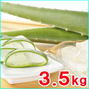 【食用アロエ】出雲産アロエベラ生葉 約3,5kg (3枚〜4枚)
