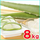 【食用アロエ】出雲産アロエベラ生葉 約8kg (6枚〜8枚)