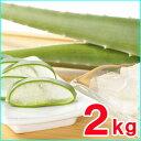 【たべるアロエ】出雲産アロエベラ 2kg〜2,5kg(2〜3枚)