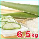 食用アロエベラ生葉 約6,5kg (5枚〜7枚)