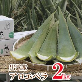 【食用アロエ】出雲産アロエベラ生葉 2kg〜2,5kg(2〜3枚)