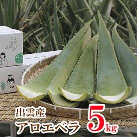 【食用アロエ】出雲産アロエベラ生葉 約5kg (4枚〜5枚)
