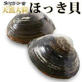 【送料無料】活ほっき貝<活/生/天然/北寄貝/ホッキ貝/ほっき飯/お刺身/天ぷら/フライ/汁物>