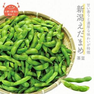 【初夏の味】新潟えだまめ 早生 250g 袋|新潟県産 枝豆 茶豆 ちゃまめ 上越フルーツ