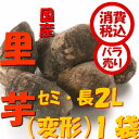 旬 野菜【税込 バラ売り】新潟五泉産 帛乙女里芋 セミ・長(変形)3L〜L800g 1袋(さといもおとめ ごせん)上越フルーツ