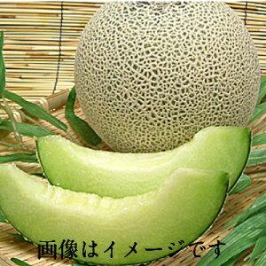 【箱売】新潟県産他 青肉メロン 2L(5玉)上越フルーツ