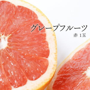 【max500円クーポンあり|マラソン】 【税込 バラ売り】南アフリカ産他 グレープフルーツ 赤 1個(ぐれーぷ 柑橘 かんきつ)上越フルーツ