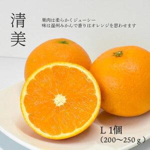 【max500円OFFクーポン|マラソン】 清見 L 1個 和歌山県産 |きよみ 蜜柑 みかん ミカン 清見オレンジ オレンジ Lサイズ フルーツ 上越フルーツ