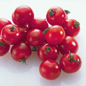 【税込 バラ売り】茨城県産他 ミニトマト 100g (トマト とまと ミニトマト みにとまと)上越フルーツ