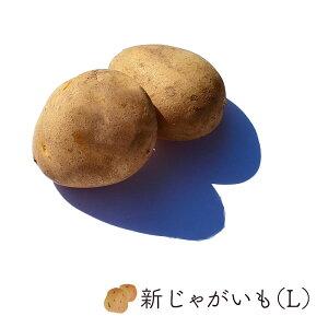 【max500円クーポンあり|マラソン】 新じゃが芋 (L)2.5kg バラ売り 長崎産他 | 業務用 じゃがいも ジャガイモ じゃが芋 新じゃが お取り寄せ 新鮮野菜 野菜 国産 新鮮野菜 上越フルーツ