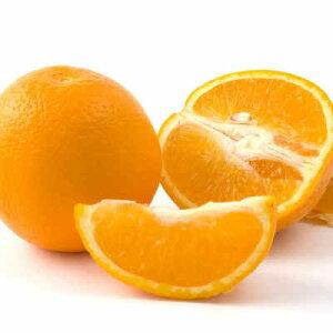 【送料無料 箱売 消費税込】南アフリカ産他 オレンジ 88玉 約 17kg  1箱 (業務用 おれんじ)上越フルーツ