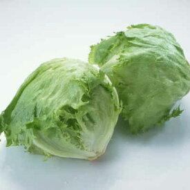 【箱売】 レタス L 19玉入 1箱 茨城県産他 | れたす サラダ Lサイズ 茨城 業務用 野菜 新鮮野菜 上越フルーツ