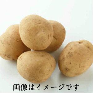【本州 送料無料 税込】 長崎県産他 新じゃが芋 大玉(2L)2.5kg 上越フルーツ