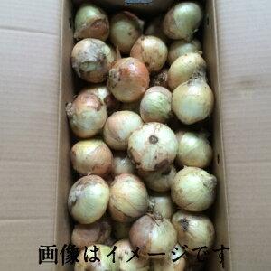 【本州 送料無料 税込】 佐賀県産他 新玉ねぎ M5kg 上越フルーツ