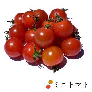 【送料無料 箱売】 ミニトマト 約200g 12パック入 1箱 長野県産他 | 業務用 ミニトマト プチトマト トマト とまと 熊本 お取り寄せ 野菜 まとめ買い 新鮮野菜 上越フルーツ