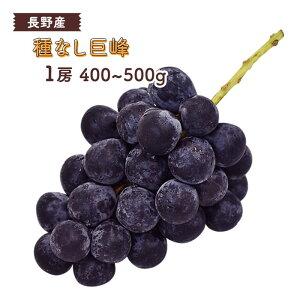 種なし 巨峰 1房(約400〜500g) 長野産 <クール便>   ぶどう ブドウ 葡萄 種無し 長野 旬 果物 上越フルーツ