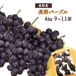 【送料無料】 長野パープル 9〜11房 4kg 長野産 <クール便>   ぶどう ブドウ 葡萄 4キロ 箱 長野 旬 果物 上越フルーツ