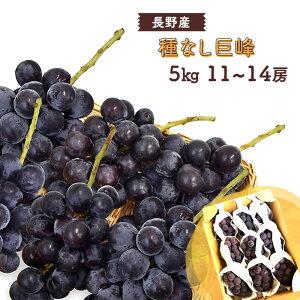 【送料無料】 種なし 巨峰 11〜14房 5kg 長野産 <クール便>   ぶどう ブドウ 葡萄 種無し 5キロ 箱 長野 旬 果物 上越フルーツ